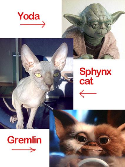 Yoda, Sphynx cat, gremlin